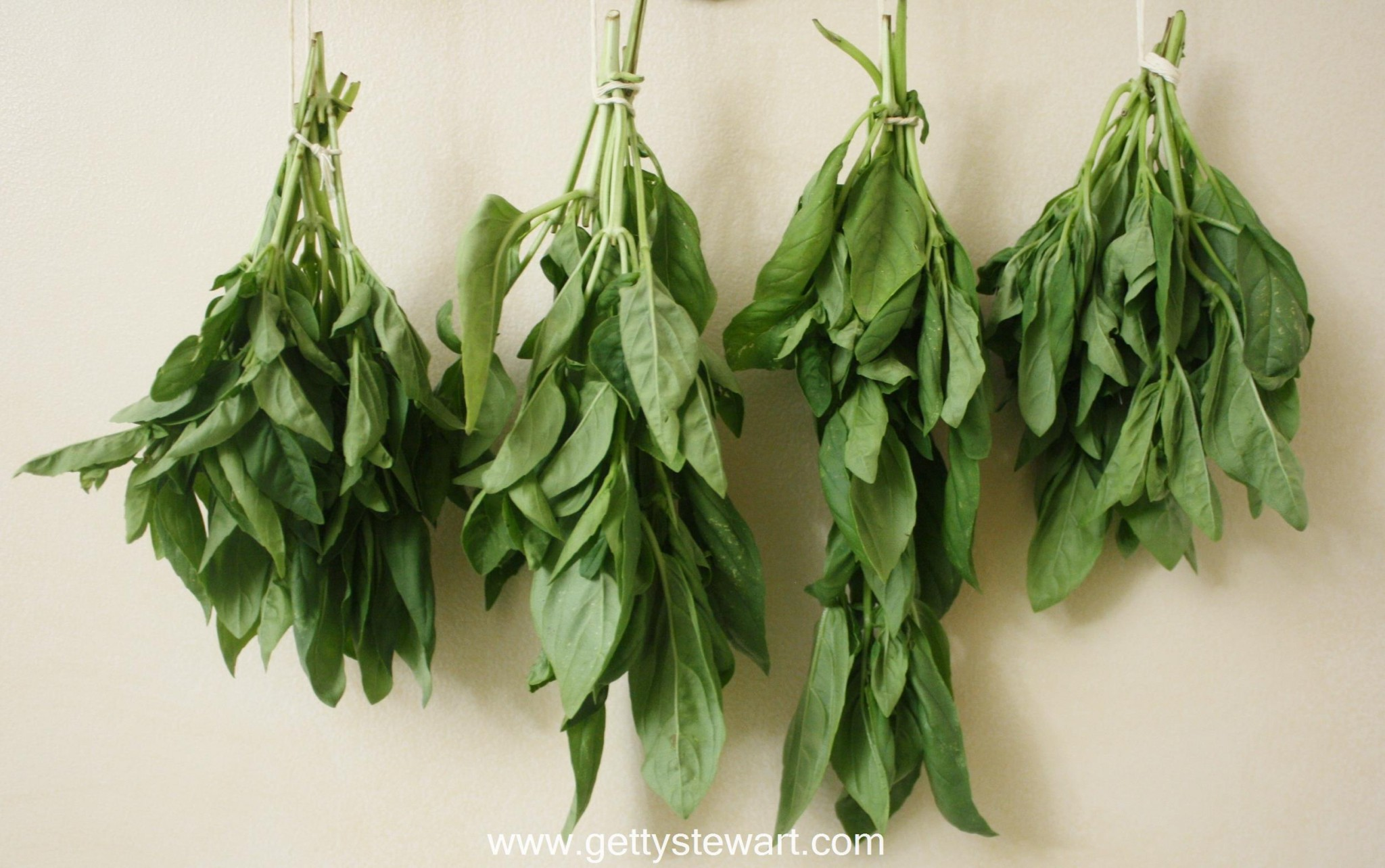 Hanging Air Plant How To Cut And Dry Basil Getty Stewart
