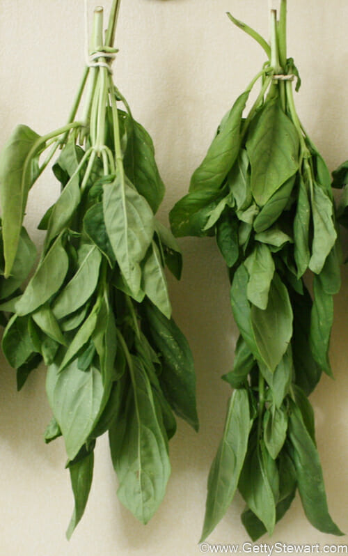 How To Cut And Dry Basil Getty Stewart