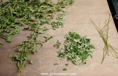 processing oregano