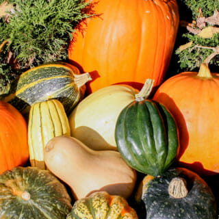 How to Identify, Harvest and Store Pumpkins and other Winter Squash