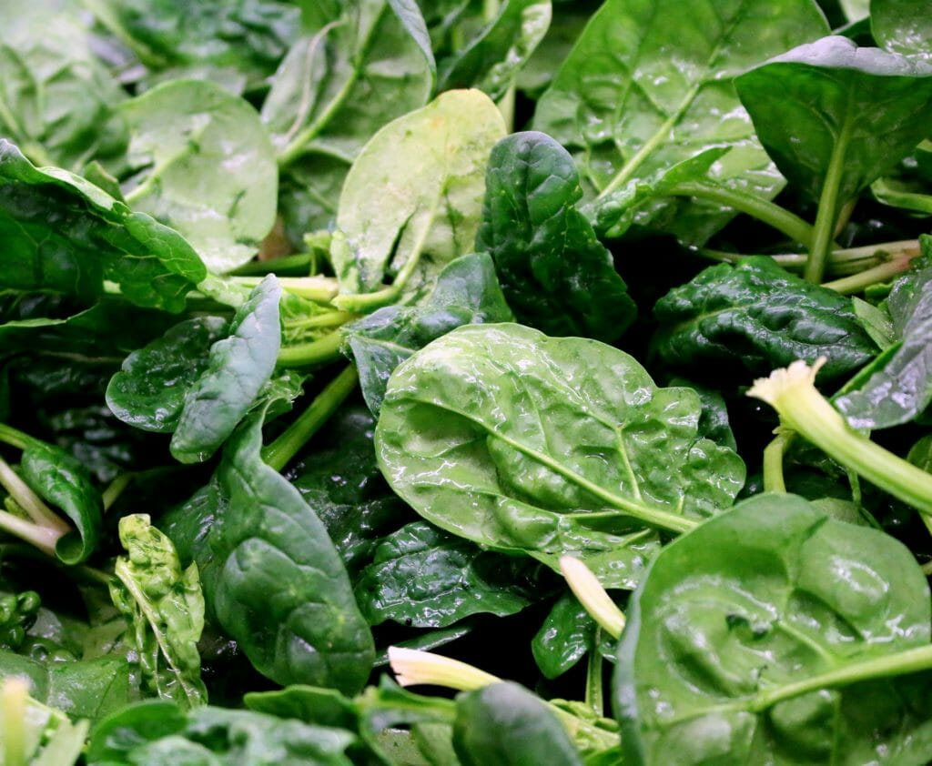 how to keep spinach leaves fresh