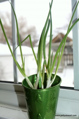 green onions in a pot