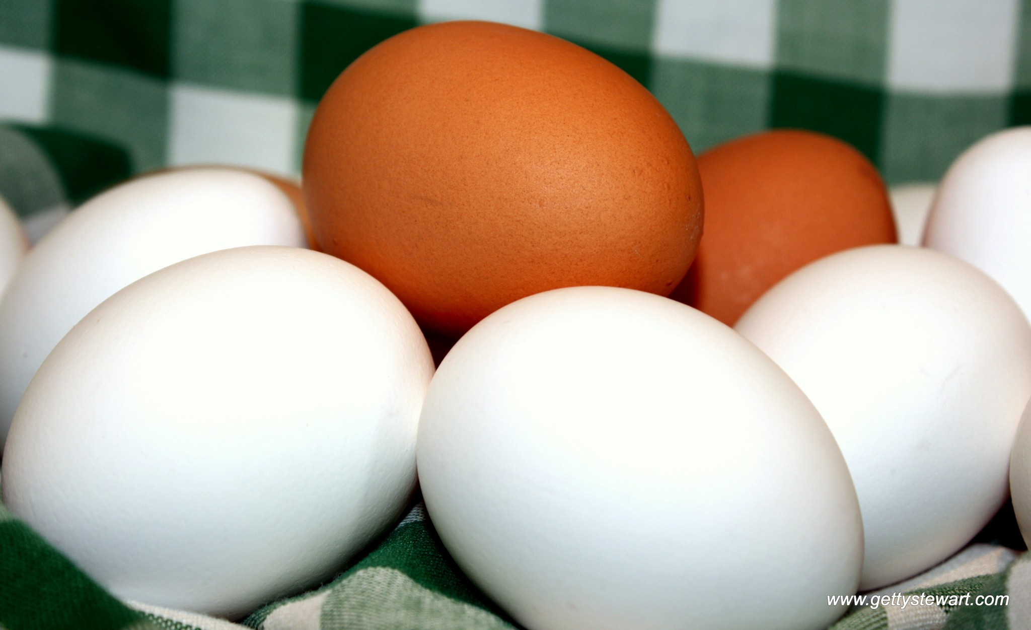 Egg Facts - Top 10 FAQs About Eggs