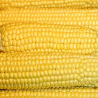 How to Plant Corn in the Garden
