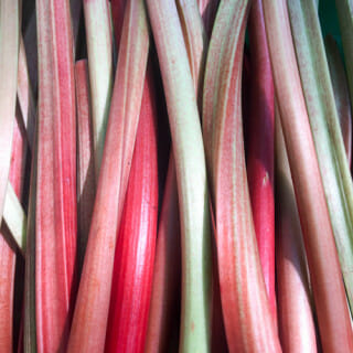 How and When to Harvest Rhubarb