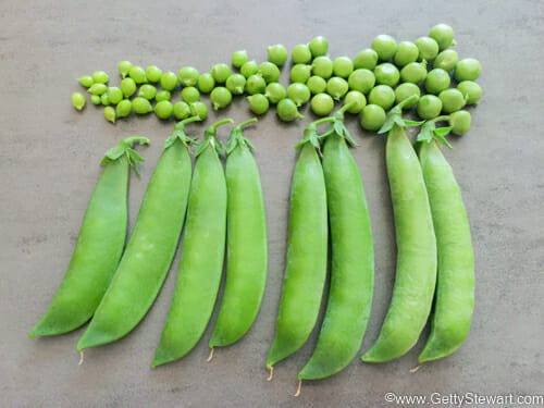 freeze peas from the garden