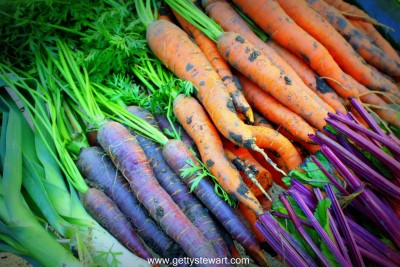 carrots purple and orange