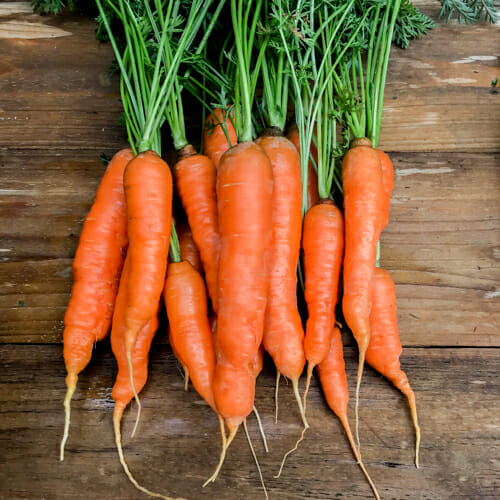 How To Harvest And Garden Carrots Getty