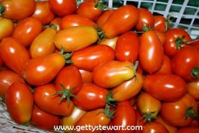 garden roma tomatoes in basket