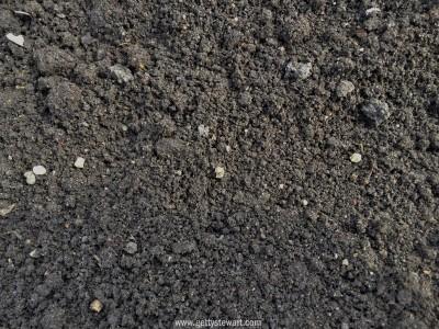 beet seed spacing