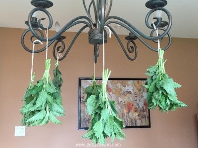 hanging nettle on chandelier - watermarked