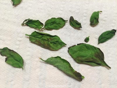 basil dried in microwave - watermarked