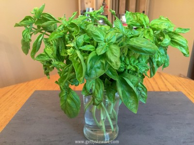 basil in a vase - watermarked