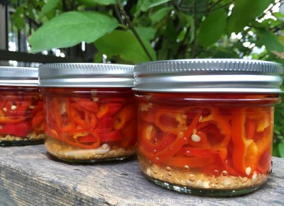 canned hot pepper rings - watermarked