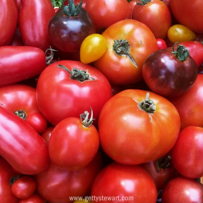 tomatoes - watermarked