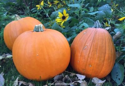 pumpkin patch - watermarked