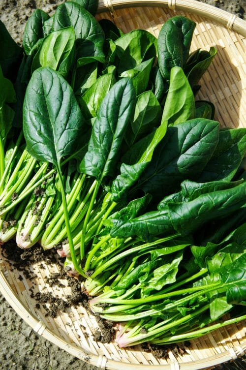 How To Blanch And Freeze Spinach