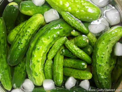 ice bath for cucumbers for pickles