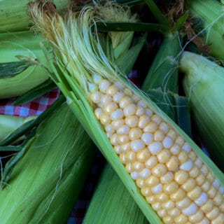 How to Pick, Store and Boil Corn on the Cob