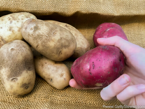 choosing the right potato