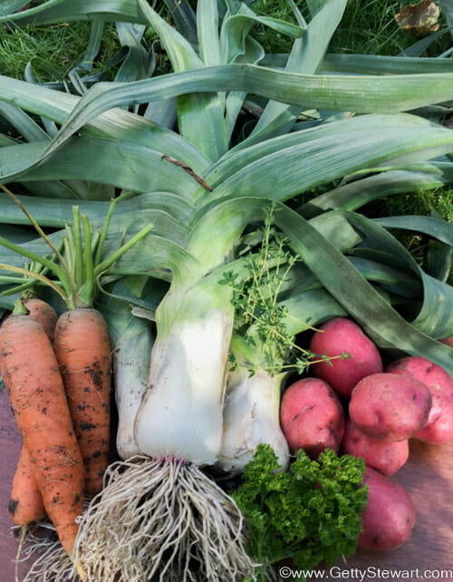 how to plant leeks for leek and potato soup